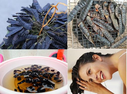 Bồ kết trị rụng tóc