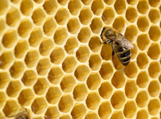sáp ong là gì