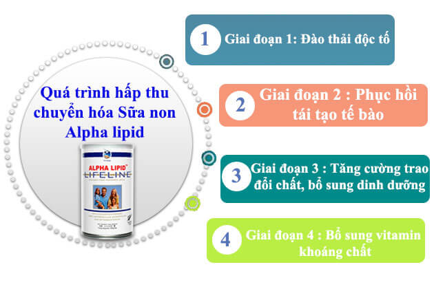 4 giai đoạn hấp thu sữa non Alpha Lipid Lifeline